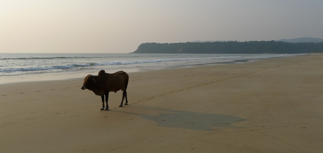 Plaża w Agondzie