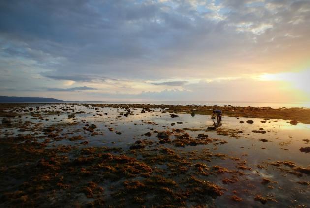 Wieczór na plaży Sandugan - mieszkańcy wyspy korzystają z odpływu i zbierają, jak sami mówią, wszystko, co da się zjeść