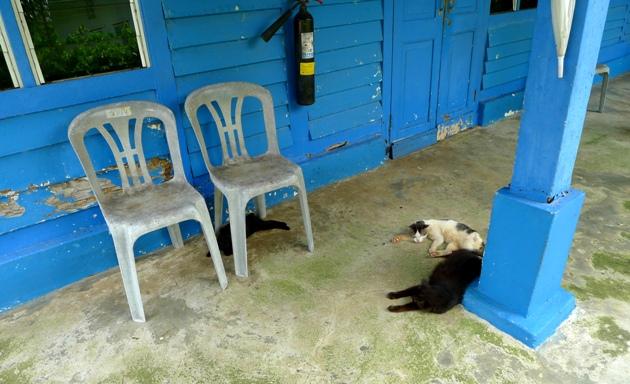 Koty - widok na wyspie nad wyraz popularny