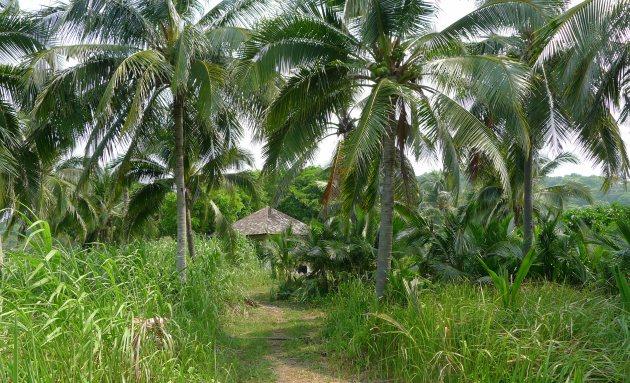 Lazarus to najdziksza wyspa z Southern Islands
