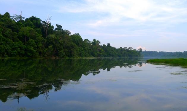 Singapur MacRitchie Reservoir