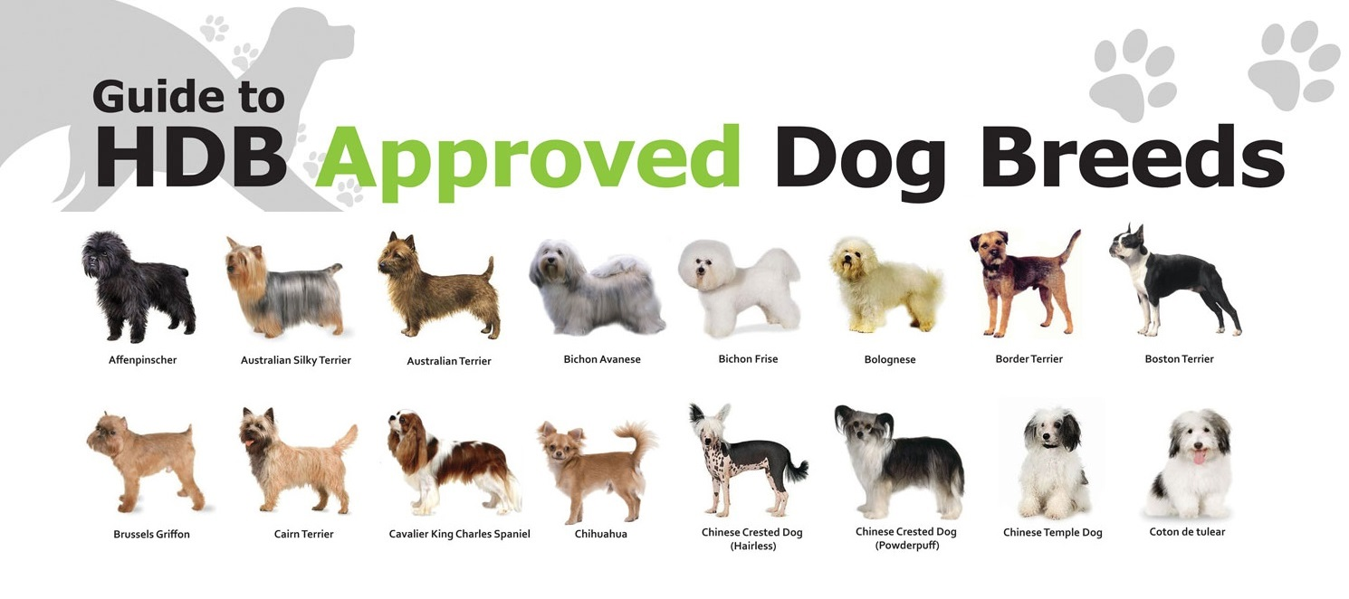 HDB Approved Dogs