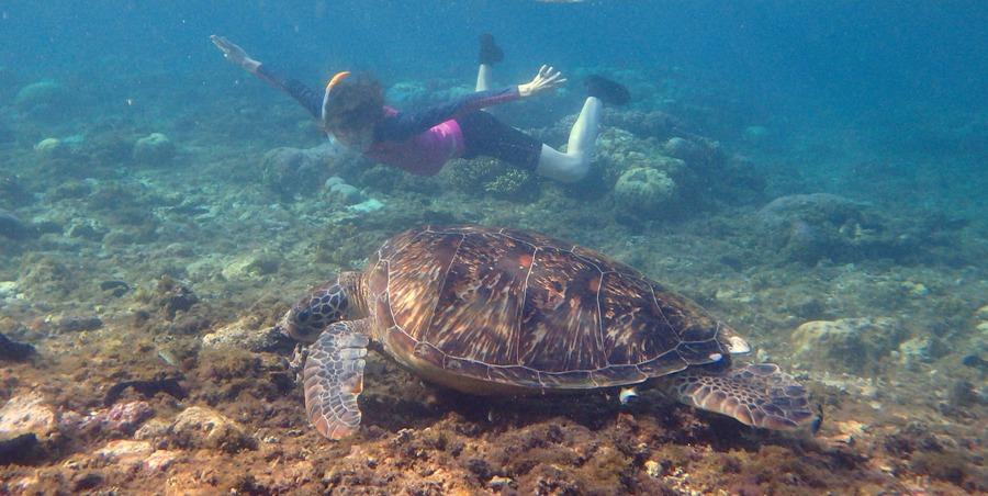 Snorkeling na wyspie Apo