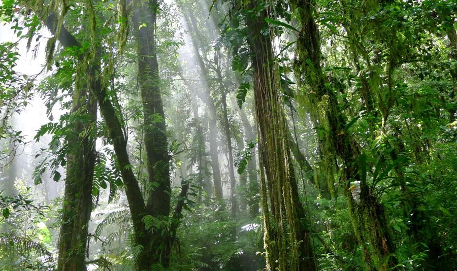 Azjatycka dżungla