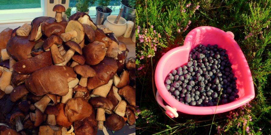 Jesień w Finlandii - dary lasu