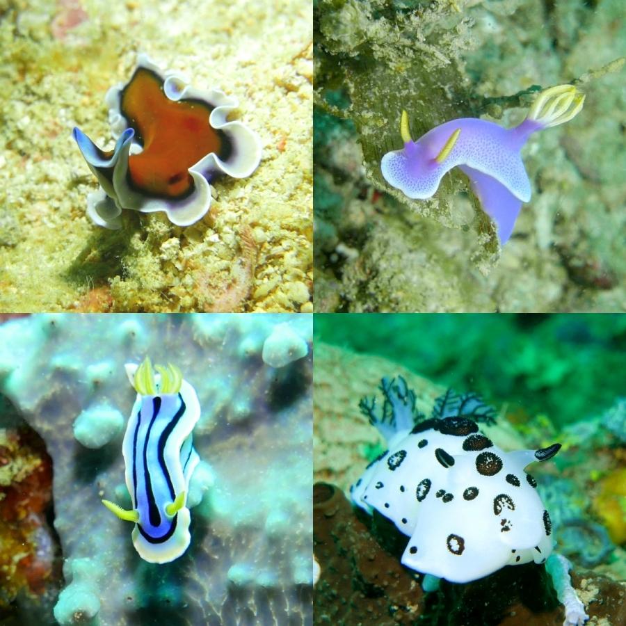 Coron - ślimaki morskie